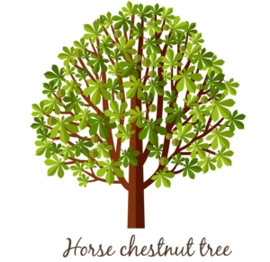 a horse chestnut tree with leaves